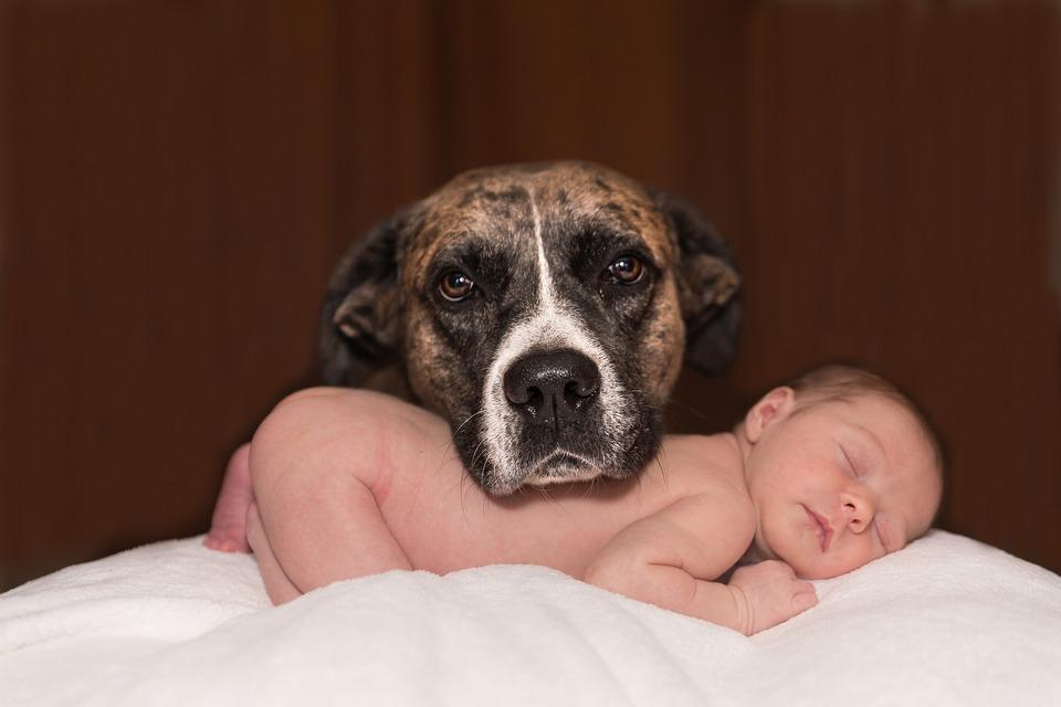 Ask Dr. Sears: Jealous Pet a Danger to Baby?