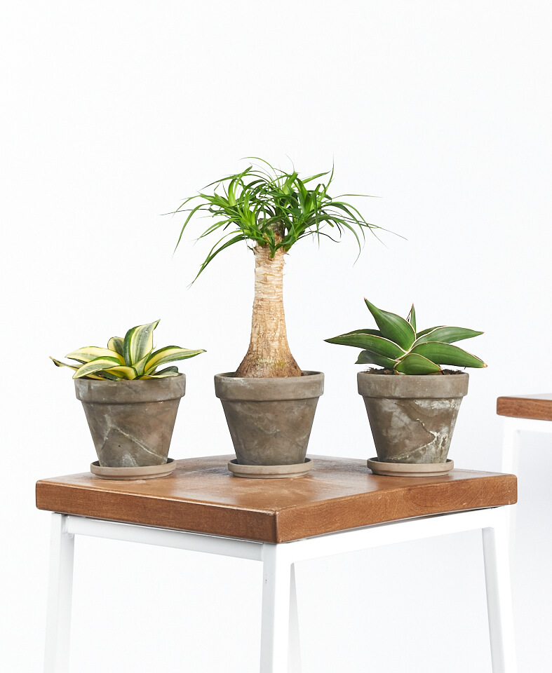 Low-Light Potted Plants