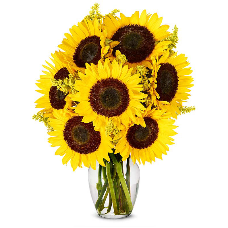 From You Flowers Stunning Sunflowers