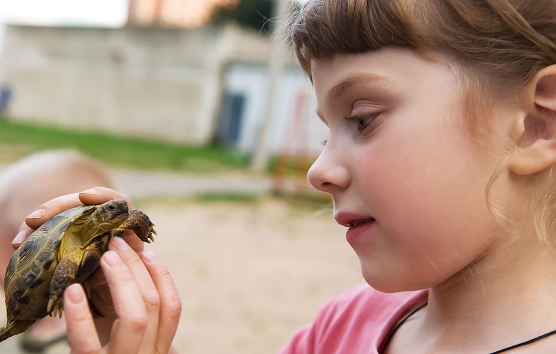 Salmonella from Pet Turtles: Just How High is the Risk for Your Kid?