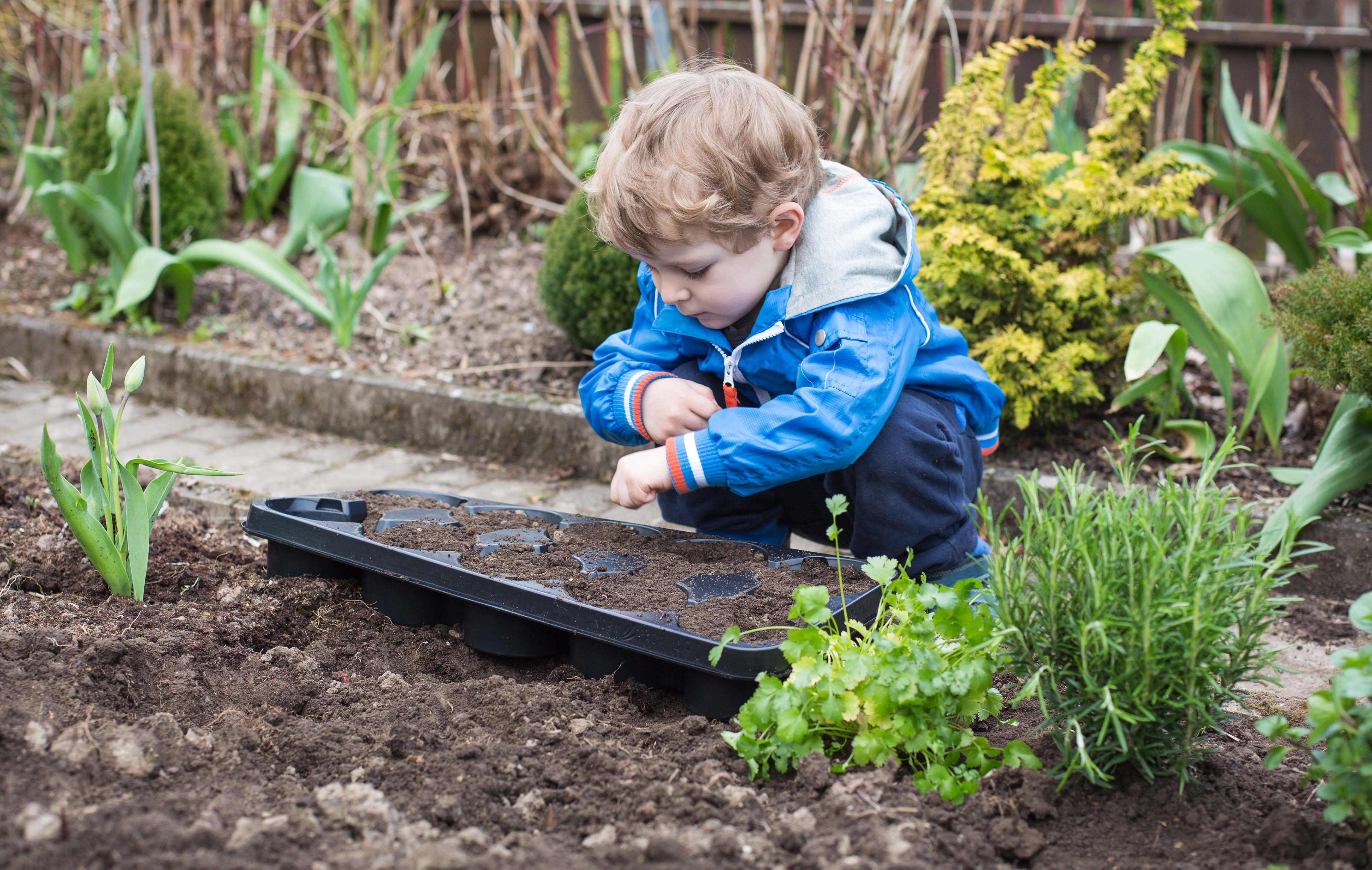 4 Tips for Gardening with Your Toddler