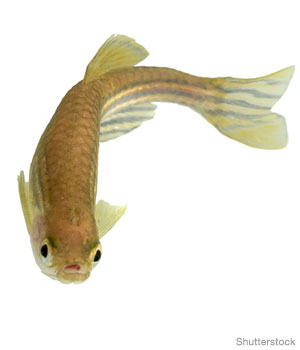 5 Tips for Caring for Pet Fish